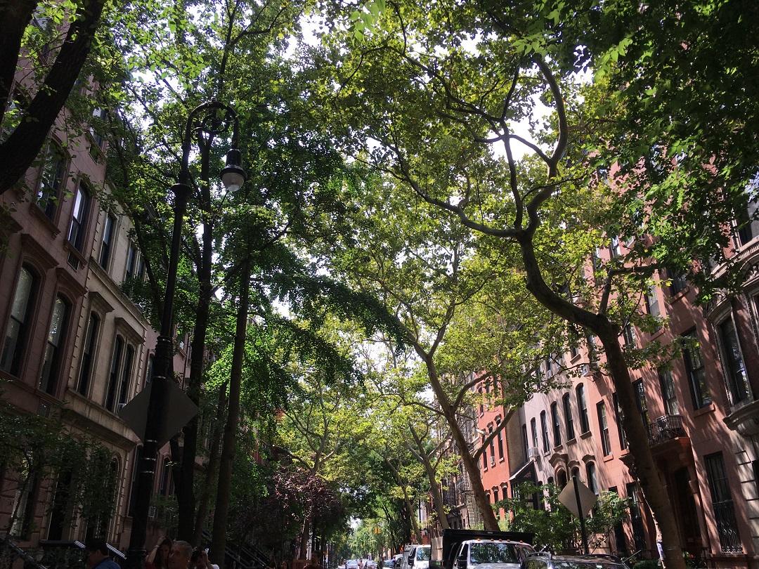 New York Chelsea Andana Dos baixa