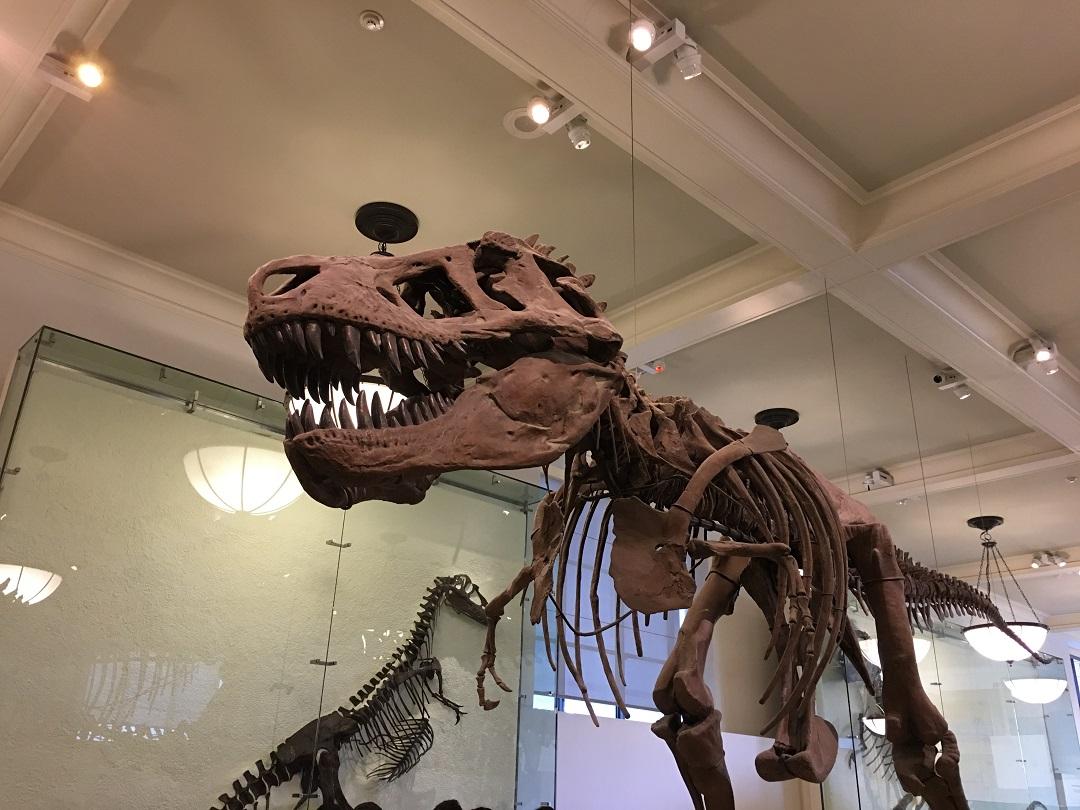 New York Museu historia natural andana dos baixa